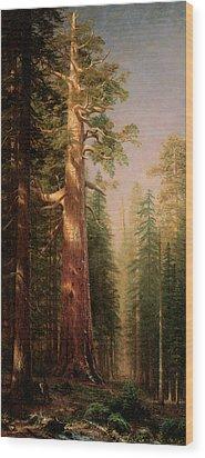 The Great Trees Mariposa Grove California Wood Print by Albert Bierstadt