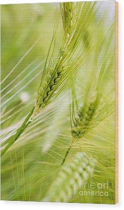 The Green Rye Beautiful Wood Print by Boon Mee