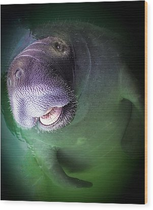 The Happy Manatee Wood Print by Karen Wiles