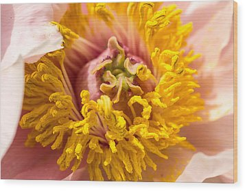 The Heart Of A Dahlia Wood Print by Cathy Donohoue