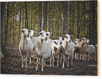 The Herd Wood Print by Swift Family