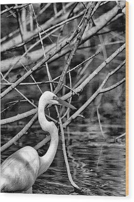 The Hidden Egret  Wood Print by Joshua House