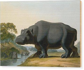 The Hippopotamus, 1804 Wood Print by Samuel Daniell