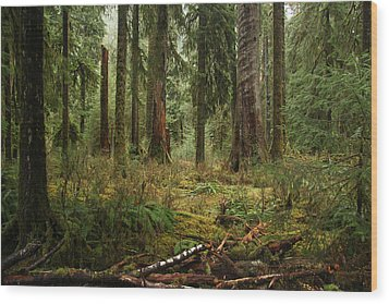 The Hoh Rainforest Wood Print