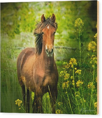 The Horse In The Wildflowers Wood Print