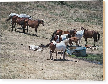 The Horses Of Placerville Wood Print