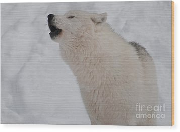 Wood Print featuring the photograph The Howler by Bianca Nadeau