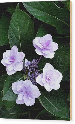 The Hydrangea / Flowers Wood Print by James C Thomas