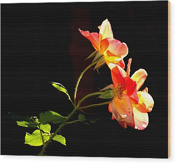 Wood Print featuring the photograph The Illuminated Rose by AJ  Schibig