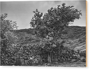 Wood Print featuring the photograph The Irish Wall And The Tree by Juergen Klust