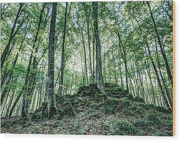 The Jordan Beech Wood In Catalonia Wood Print