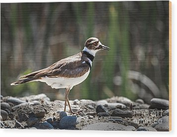 The Killdeer Wood Print by Robert Bales