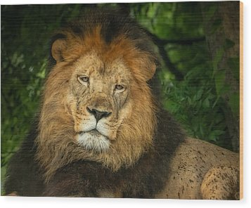 Wood Print featuring the photograph The King Rests by Linda Karlin