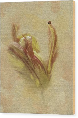 The Lady And The Parrot Tulip Wood Print by Diane Schuster