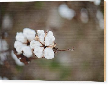 Wood Print featuring the photograph The Land Of Cotton by Linda Mishler