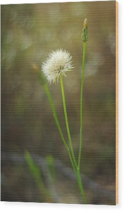 Wood Print featuring the photograph The Last Dandelion by Suzanne Powers