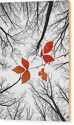 The Last Leaves Of November Wood Print by Robert Charity