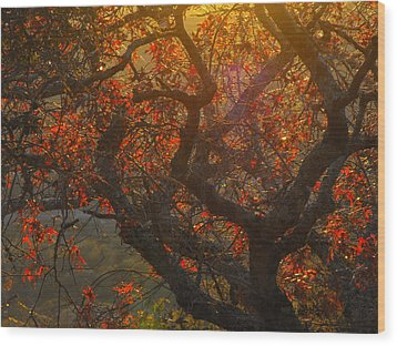 The Last Leaves On The Tree Wood Print by Rebecca Cearley
