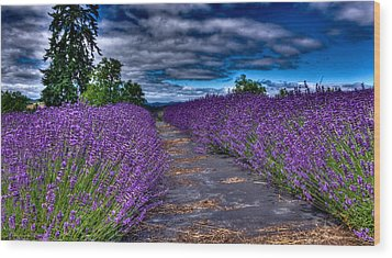Wood Print featuring the photograph The Lavender Field by Thom Zehrfeld