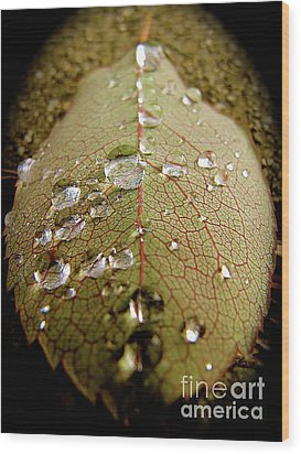 The Leaf After Rain Wood Print by CML Brown