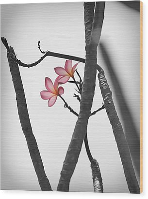 The Light Of Plumeria Wood Print by Chris Ann Wiggins