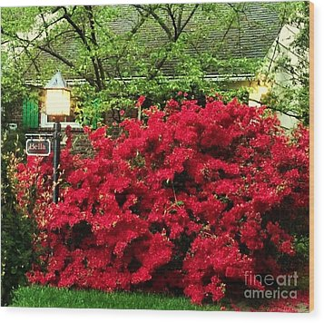 Wood Print featuring the photograph The Light Red Bush Bella by Becky Lupe