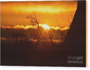 The Light Shines Wood Print by Sheldon Blackwell