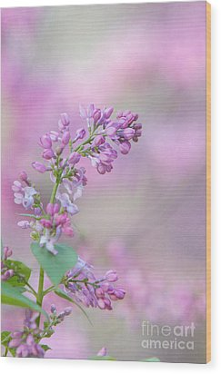 The Lilac Wood Print by Kay Pickens