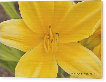 Wood Print featuring the photograph The Lily From Kentucky by Verana Stark