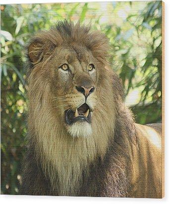 The Lion King Wood Print by Kim Hojnacki