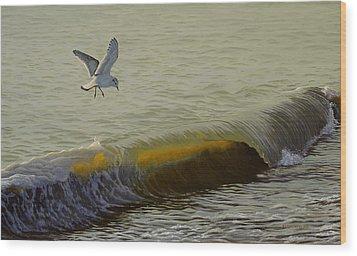 The Little Gull Wood Print