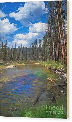 The Little Redfish Creek Wood Print by Robert Bales