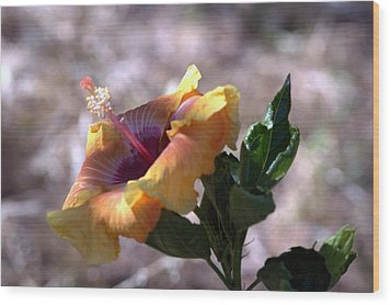 The Lonely Hibiscus Wood Print