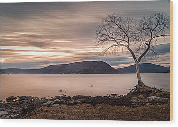 Wood Print featuring the photograph The Lonely Tree by Anthony Fields