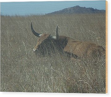 Wood Print featuring the photograph The Longhorn by Alan Lakin