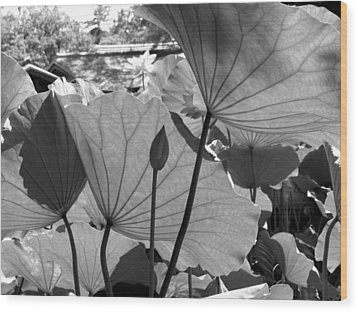 Wood Print featuring the photograph The Lotus Pond by Larry Knipfing