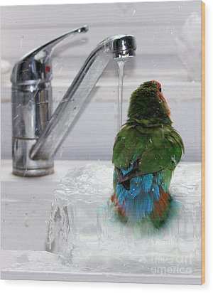 The Lovebird's Shower Wood Print
