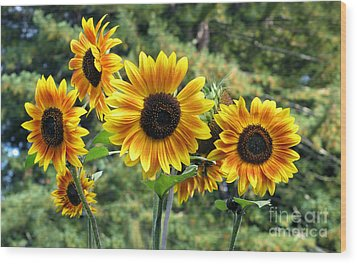 The Magic Of Sunflower Power Wood Print by Wernher Krutein