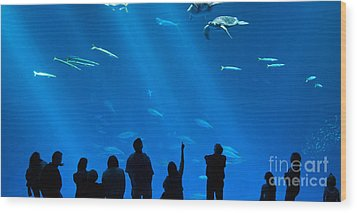 The Magnificent Open Sea Exhibit At The Monterey Bay Aquarium. Wood Print by Jamie Pham
