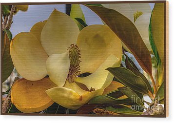 Wood Print featuring the photograph The Magnolia by Maddalena McDonald