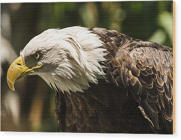 Wood Print featuring the photograph The Majestic American Bald Eagle by Yeates Photography