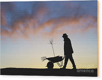 The Man Who Plants Trees Wood Print by Tim Gainey