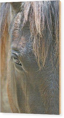 The Mane Eye Wood Print by Bruce Gourley