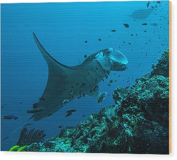 Wood Print featuring the photograph The Manta From Manta Alley by Terry Cosgrave