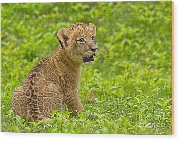 The Markings Of Youth Wood Print by Ashley Vincent
