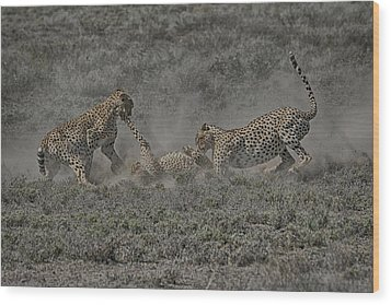 Wood Print featuring the photograph The Mating Game 2 by Gary Hall
