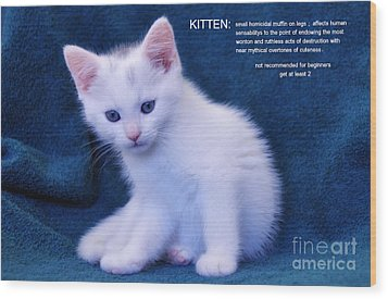 The Meaning Of A Kitten Wood Print by Elaine Manley