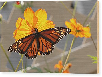 Wood Print featuring the photograph The Monarch by Cathy Donohoue