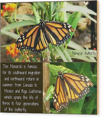 Wood Print featuring the photograph The Monarch Story by Mindy Bench