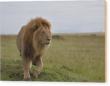 The Most Beautiful Lion Of The Masai Mara Wood Print by Maggy Meyer